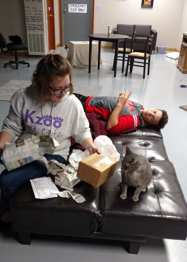 Kzoo Cat Cafe Hours